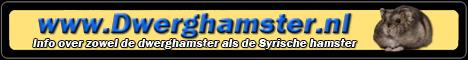 Banner van Dwerghamster.nl
